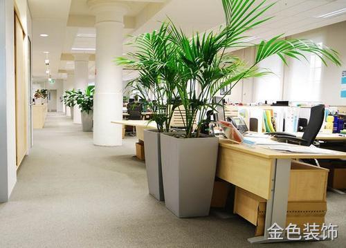 办公室装修后 植物